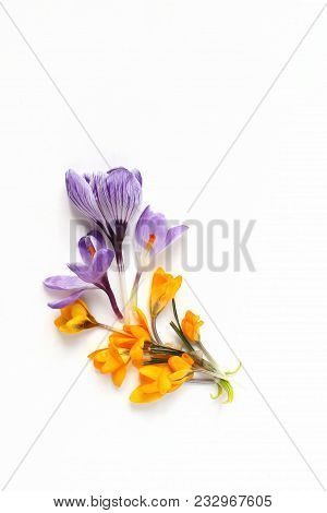 Spring, Easter Floral Composition. Yellow And Violet Crocuses Flowers On White Wooden Background. St