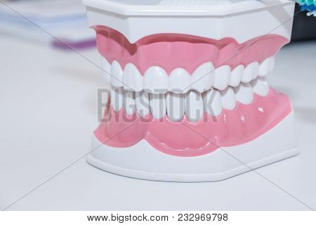 Clean Teeth Denture, Dental Cut Of The Tooth, Tooth Model, And Dentistry Instruments In Dentist's Of
