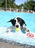 cute dog at a swimming pool poster