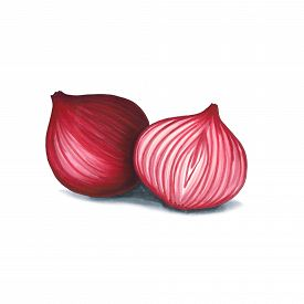Red Onion On A White Background. Sketch Done In Alcohol Markets. You Can Use For Greeting Cards, Pos