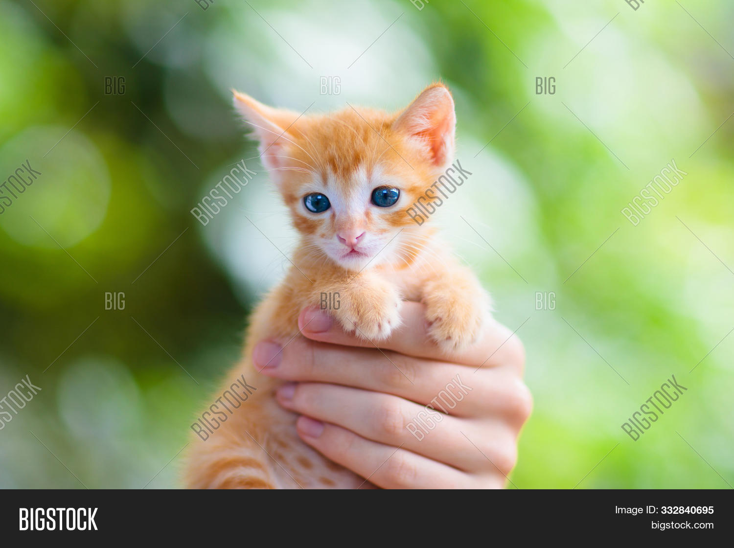 Child Holding Baby Cat Image Photo Free Trial Bigstock