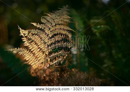 Forest Fern Pacific Northwest. Sun Hits Ferns On A Tree In A Temperate Rainforest Of The Pacific Nor