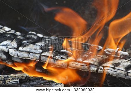 Bonfire. Orange Flame Of A Fire. Burning Birch Tree In The Fireplace.