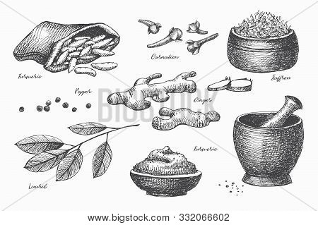 Hand Drawn Set Of Spices For Cooking. Spicy Spices:  Carnation, Pepper, Ginger, Laurel, Turmeric And
