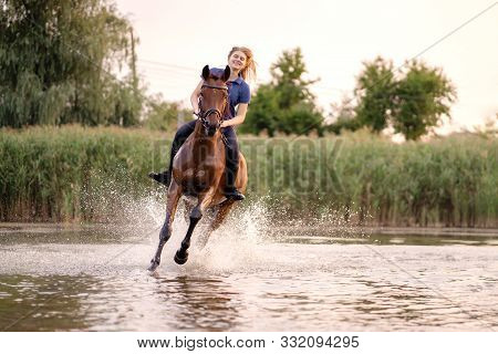 A Young Girl Riding A Horse On A Shallow Lake. A Horse Runs On Water At Sunset. Care And Walk With T