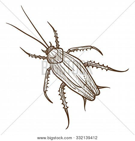 Titan Beetle Insect Top View Hand Drawn Sketch Illustration