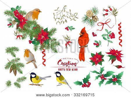 Tit Bird, Robin Bird, Cardinal Bird, Christmas Wreath Of Spruce, Pine, Poinsettia, Dog Rose, Fir. Se