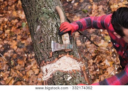 Woodman With An Axe Resting In The Forest. Lumberjack Stands Near A Tree And Looks Away