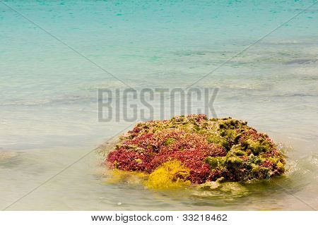 Caribbean coral with net