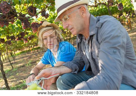 Winemakers Father Share Its Experience With Son In Vineyard. Family Winery Business. Winegrower Man