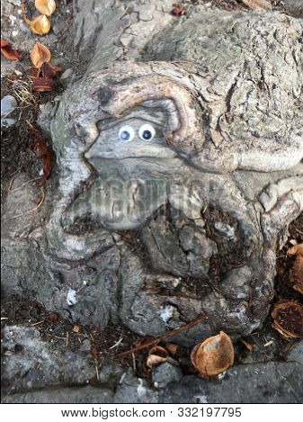 Frog Made Out Of Roots Of A Living Tree