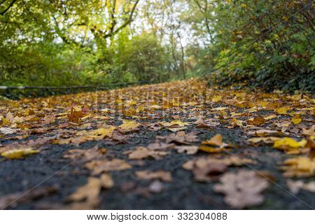 Close Up Of Autumn Leaves Laying On A Park Road