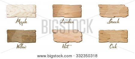 Vector Set With Samples Of Wooden Boards Of Different Trees Maple, Linden, Beech, Willow, Nut, Oak.
