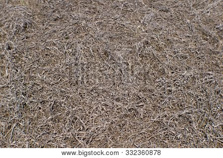 Natural Background Of Dried Grass Brown. Organic Texture