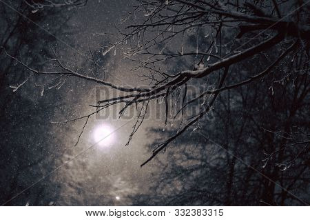 Winter Landscape. Mystical Atmospheric Night Forest Scene Falling Snow From Sky And White Full Moon