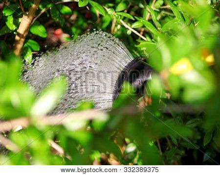 Watering Flowers In The Garden With A Yellow Watering Can. Close Up On Water Pouring From Watering,