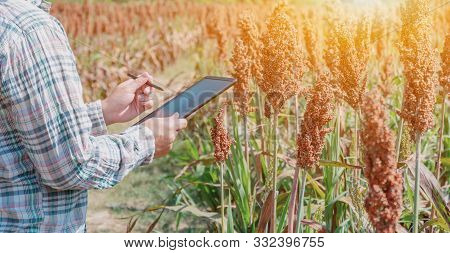 Farmer Using Tablet For Checking The Quality Of Agricultural Crops In Field. Fall Harvest Cornucopia