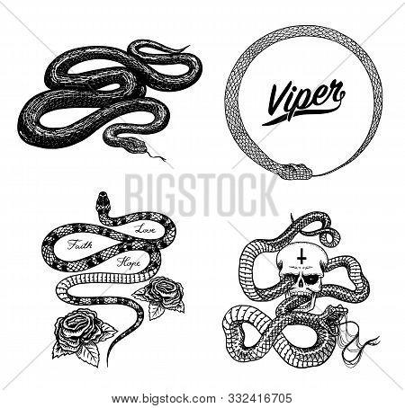 Vintage Snake Set. Royal Python With Skull And Roses, Milk Reptile, Venomous Cobra. Poisonous Viper