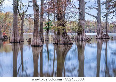 bald cypress trees on a lake shore at dawn in fall scenery - Horseshoe Lake Natural Preserve, Illinois