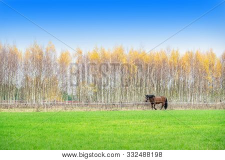 The Zemaitukas Horse In Autumn, A Historic Horse Breed From Lithuania. It May Be Classified As A Pon