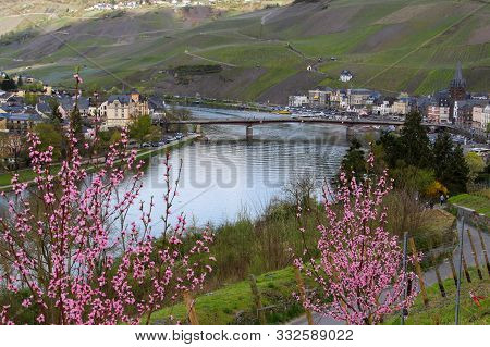 View At  The City Bernkastel-kues On River Moselle, Germany With The Moselle Bridge And Shrub With P