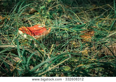 Toadstools In Forest Under Tree In Grass