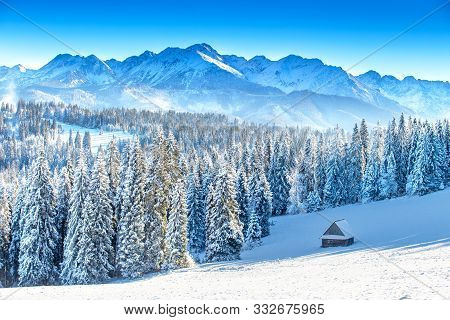 Picturesque Mountains With Forest In Valley Covered With Snow. Beautiful Winter Landscape With Clear