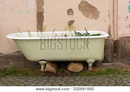 Detail View Of Basic Urban Gardening In A Defunct Old Bathtub