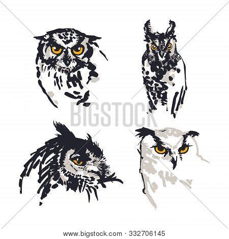 Owls Illustration. Set Of Four. Digitalized Sketches. Ink Brush-pen And Markers On Paper. Black, Gre