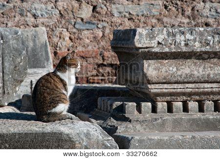 Cat Of Antique Town
