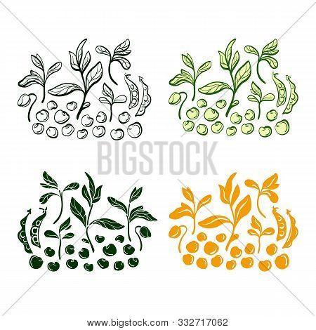 Soy Bean. Vector Set Of Plant, Grain, Leaf. Natural Organic Food. Hand Drawn Illustration On White B