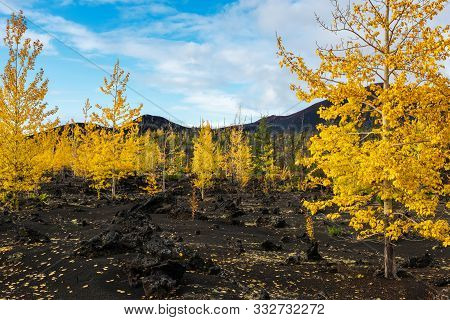 Autumn Landscape In Kamchatka, Russia. Yellow And Green Trees Against The Background Of Mountains Co
