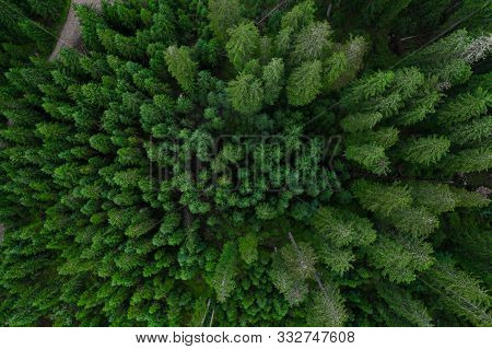 Aerial Top View Forest, Texture Of Forest View From Above, Copter Drone View, Panoramic Photo Over T