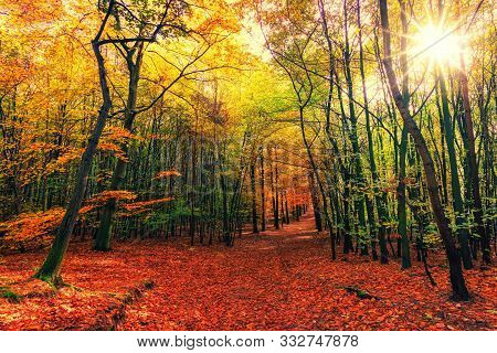 In Images Colorful Falling Autumn Leaves Overlay Image Of Dirt Path Wooded Forest Trail