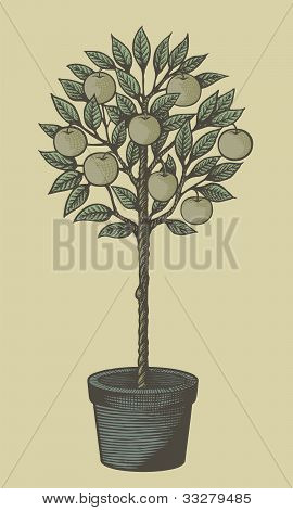 Apple Tree Woodcut