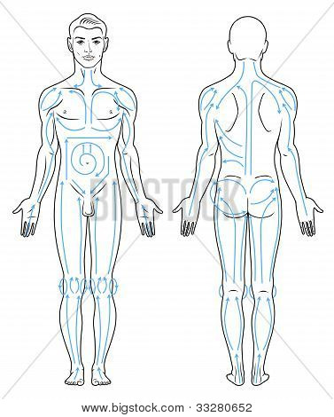 Body massaging lines for man