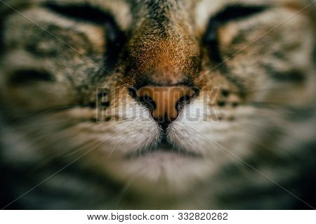 Close Up View Of Sleeping Cat With Selective Focus. European Cat Portrait. Portrait Of Beautiful Cat