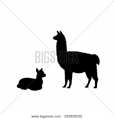 Silhouette Of Lama Alpaca And Young Little Lama Alpaca. Vector Illustrator