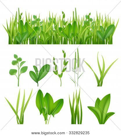 Grass Realistic. Ecology Set Green Herbs Leaves Plants Lifes Meadows Vector Elements Collection. Gra