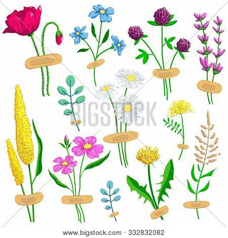 Set Of Wildflowers. Cute Bouquets Secured With Adhesive Plaster. Isolated Plants On A White Backgrou