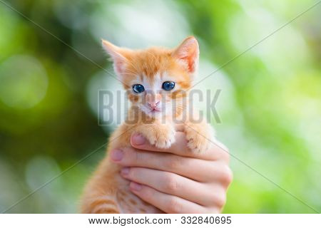 Child Holding Baby Cat. Kids And Pets. Little Girl Hugging Cute Little Kitten At Home. Domestic Anim