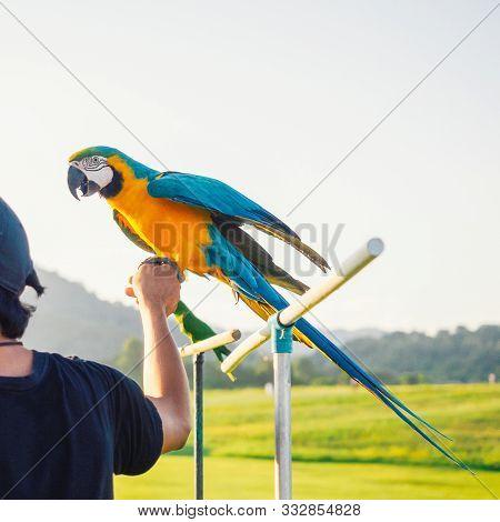 Parrot Is Cute Exotic Pet