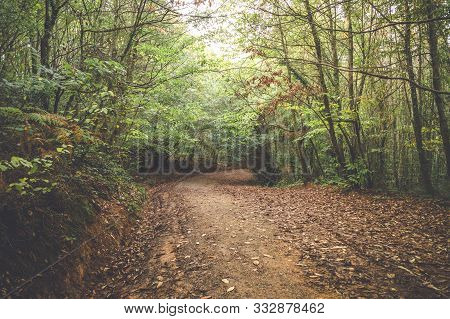 Peaceful Scenery Of A Pathway Covered With Autumn Leaves In The Forest.