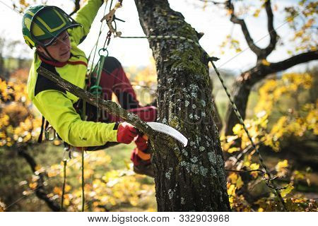 Arborist Man Preparing For Climbing On A Tree. The Worker With Helmet Working At Height On The Trees