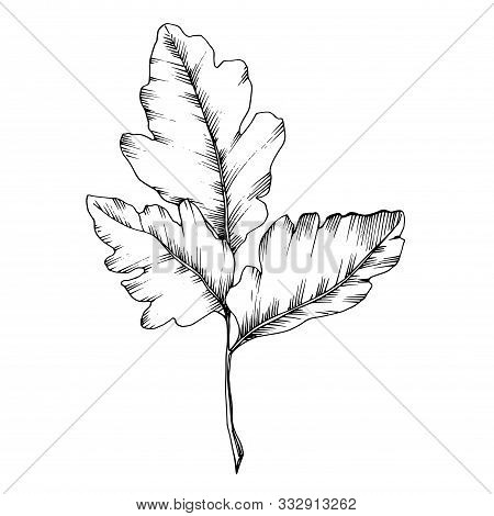 Vector Sorbus Leaf. Black And White Engraved Ink Art. Isolated Sorbus Illustration Element.