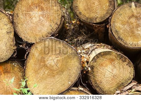 The Image Shows A Stack Of A Cutted Wood In The Forest
