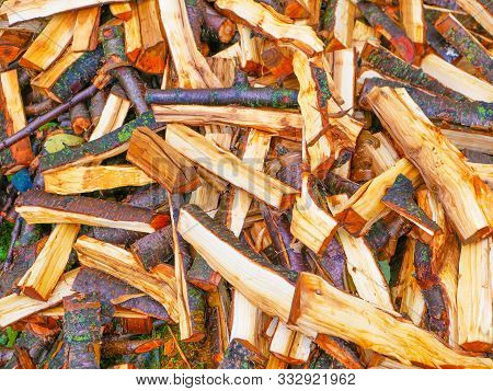 poster of Freshly cut tree logs. Cut pine logs. Close-up. Firewood for the winter. Bouquet of many fresh logs. Wet logs. Orange color cut