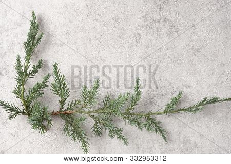 Concrete Light Background, The Angular Arrangement Of Pine Branches.