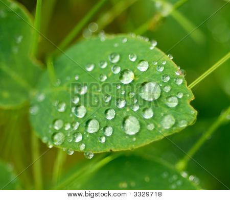 Wet Leaf Macro