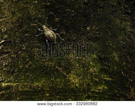 Pequeño Insecto Posado Sobre Un Viejo Tronco